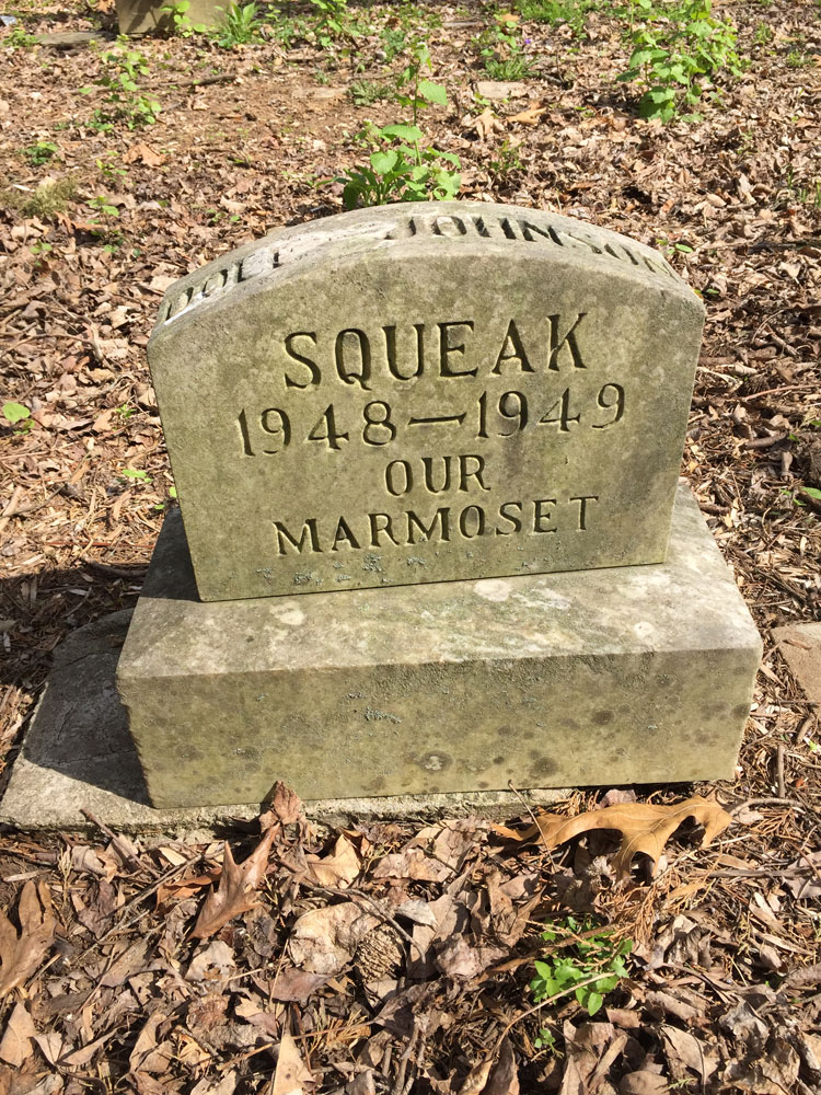 """Squeak 1948-1949 Our Marmoset"" Aspin HIll Memorial Park."