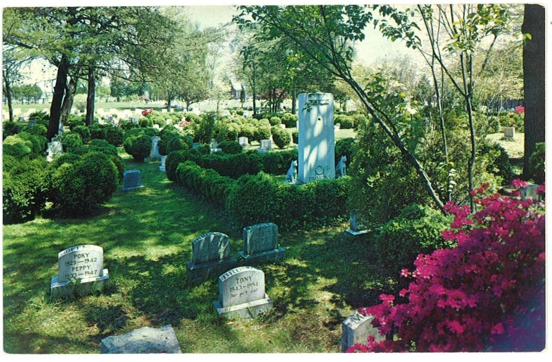 Postcard, Aspin Hill Cemetery for Pet Animals, ca. 1970. Courtesy Montgomery County Historical Society.