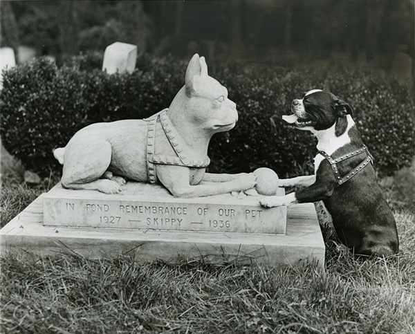 Boston terrier paying respects to Skippy. August 15, 1946. Reprinted with permission of the DC Public Library, Star Collection © Washington Post