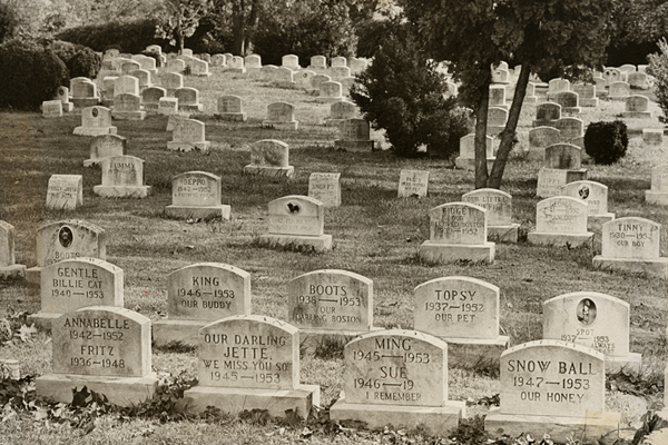 Cemetery scene. October 24, 1977. Evening Star staff photographer Willard Volz. Reprinted with permission of the DC Public Library, Star Collection © Washington Post