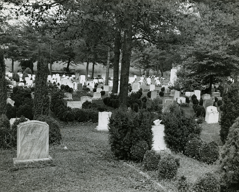 Cemetery scene. August 16, 1946. Evening Star staff photographer F. Routt. Reprinted with permission of the DC Public Library, Star Collection © Washington Post