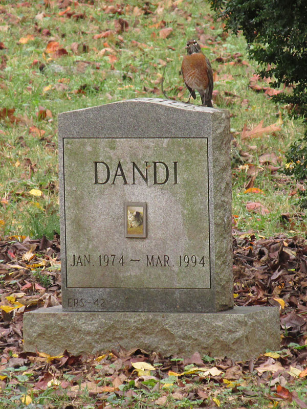 Dandi - Jan. 1974 - Mar. 1994. (November 2017)