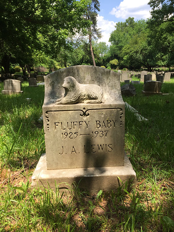 Fluffy Baby 1925-1937 J. A. Lewis. (May 2018)