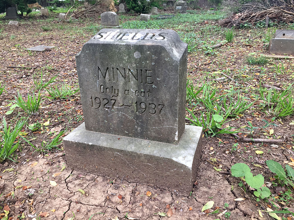 Minnie - Only a cat 1927-1937. [Shields] (May 2018)