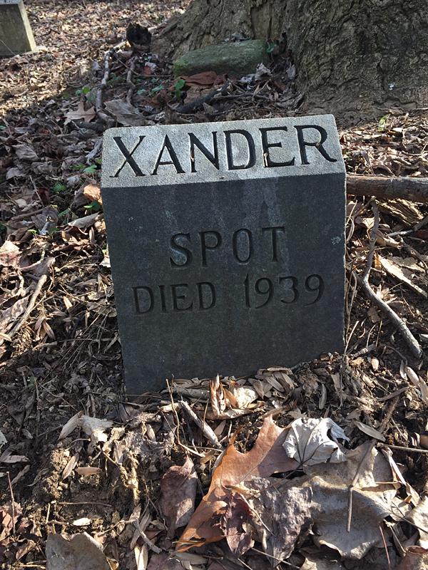 Spot - Died 1939. [XANDER] (December 2018)