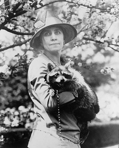 Mrs. Calvin Coolidge, half-length portrait, standing, facing front, holding her pet raccoon Rebecca, ca. 1922. National Photo Company Colleciton. Library of Congress call number: LC-USZ62-100816
