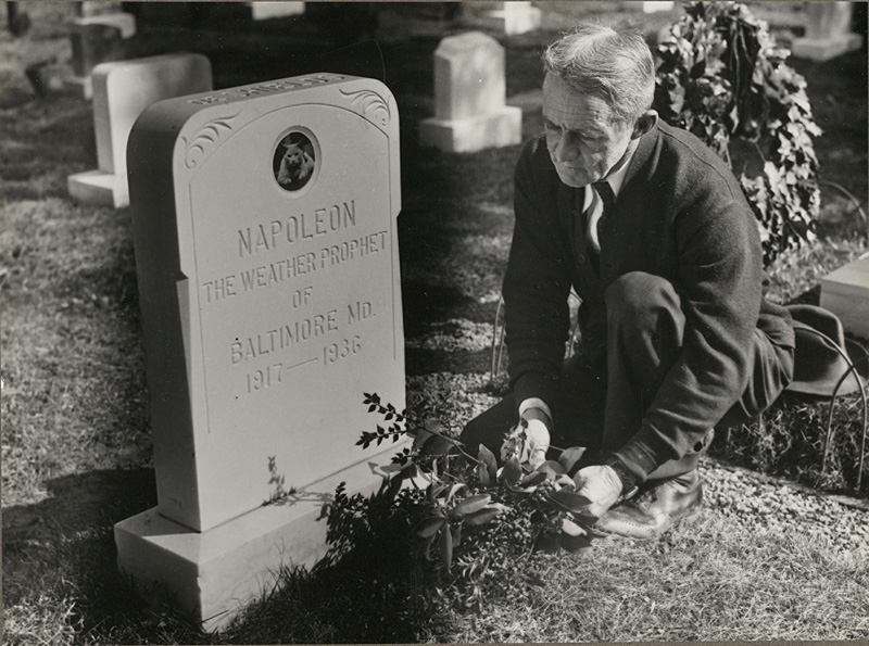 Man decorating the grave of Napoleon the Weather Prophet of Baltimore. February 13, 1938. Gift of the News-Post and Baltimore American. From the Collection in the Maryland Department, Enoch Pratt Free Library