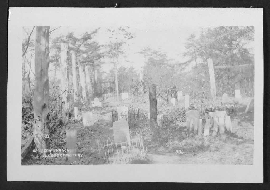 Postcard, Eastern Branch, the dog cemetery. Willard R. Ross Postcard Collection, D. C. Public Library.