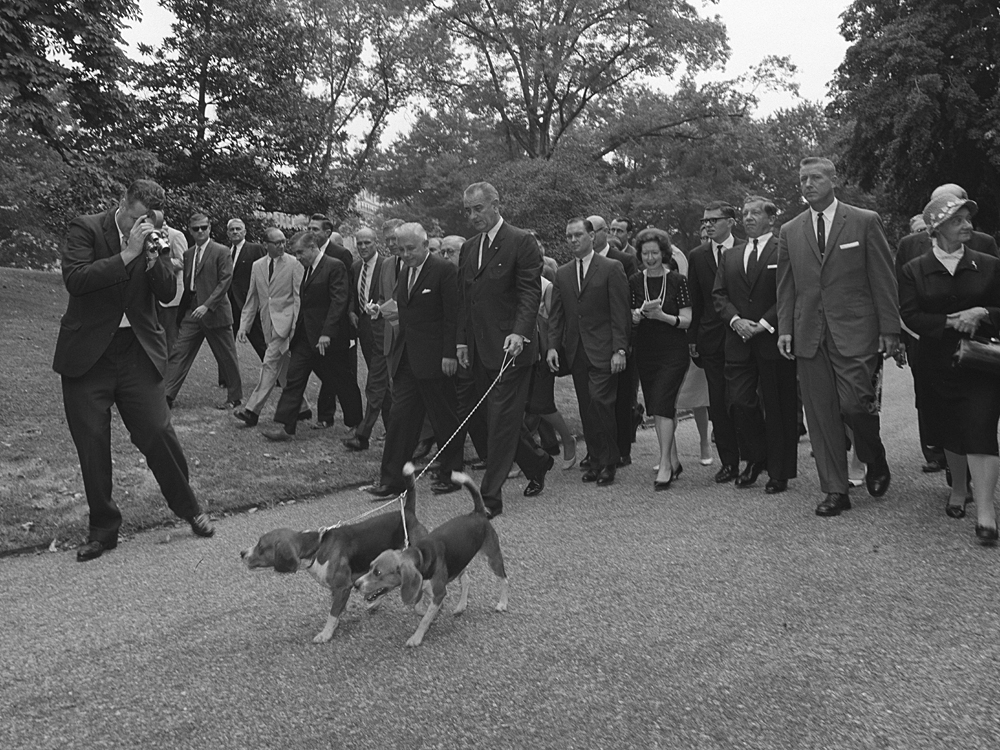President Lyndon B. Johnson walks his two beagles as a large group of press members follow. Photo by Cecil Stoughton August 18, 1964. LBJ Library Photo Archive: Image 336-2-WH64