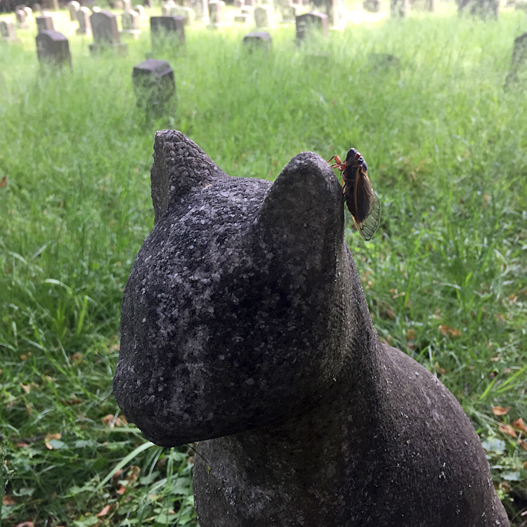 Cicadas on a cat statue. Aspin Hill Memorial Park, May 22, 2021