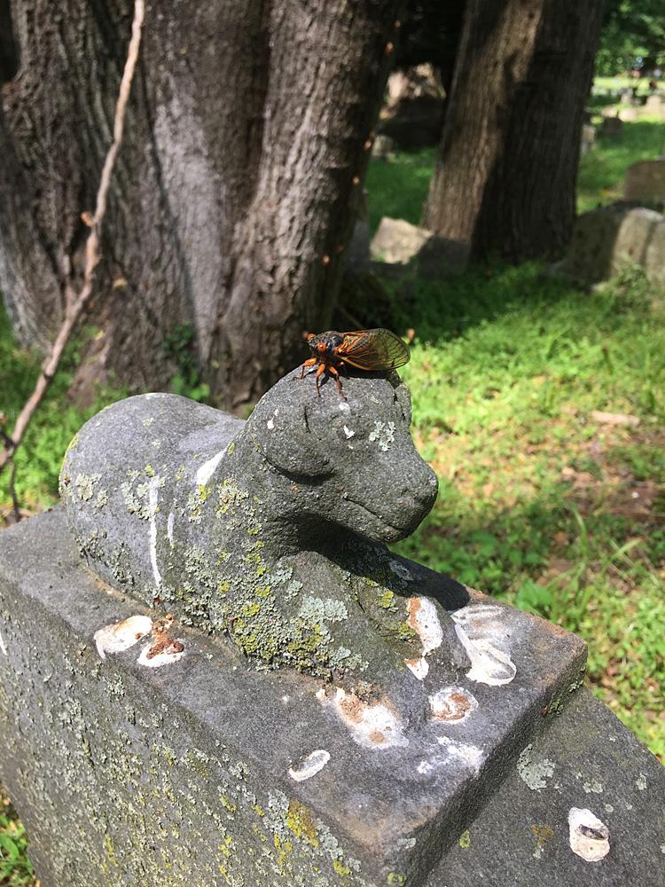 Cicadas on a lamb statue. Aspin Hill Memorial Park, May 22, 2021